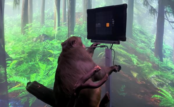Илон Маск показал видео с обезьяной, которая играет в видеоигру силой мысли